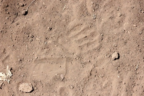 A Baboon track