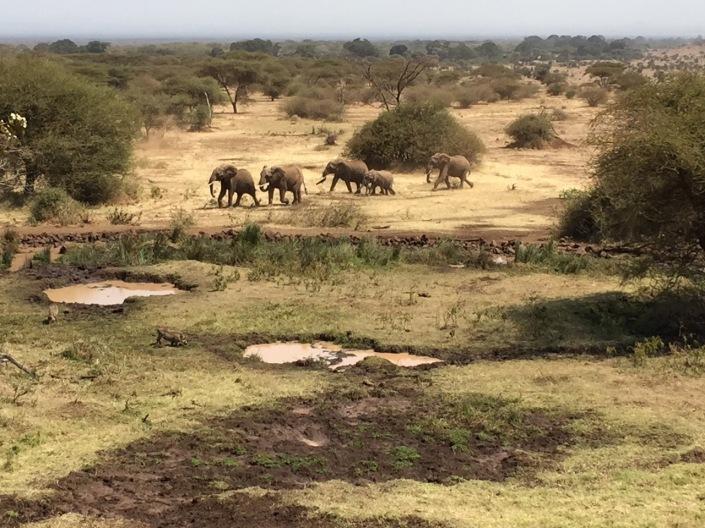 A Elephants