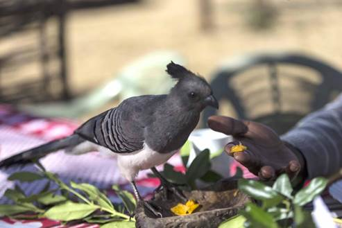 Feeding bird at the Bandas. Gallman Conservancy, Laikipia, Kenya - photo by Alice Kohler