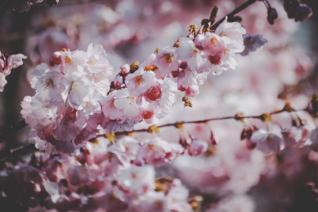 bloom-blossom-branch-981367